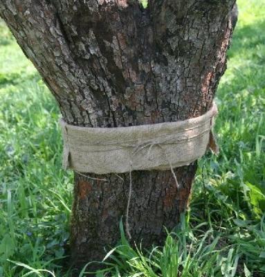 Как сделать ловчие пояса на дереве